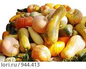 Купить «Урожай тыквы», фото № 944413, снято 4 октября 2008 г. (c) Елена Климовская / Фотобанк Лори