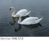 Купить «Лебеди», фото № 946513, снято 10 мая 2009 г. (c) Алла Виноградова / Фотобанк Лори