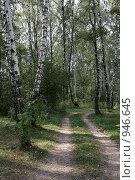 Купить «Лесная дорога», фото № 946645, снято 7 сентября 2008 г. (c) Юрий Синицын / Фотобанк Лори