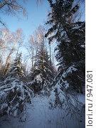 Купить «Зимний лес», фото № 947081, снято 4 января 2009 г. (c) Александр Максимов / Фотобанк Лори