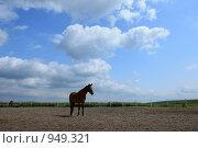 Купить «Лошадь в загоне», фото № 949321, снято 29 июня 2009 г. (c) Яна Королёва / Фотобанк Лори