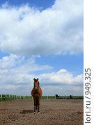 Купить «Лошадь в загоне», фото № 949325, снято 29 июня 2009 г. (c) Яна Королёва / Фотобанк Лори