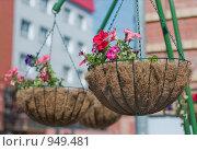 Купить «Цветы в подвесном кашпо из кокосового волокна, крупный план», фото № 949481, снято 28 июня 2009 г. (c) Сергей Плюснин / Фотобанк Лори