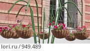 Купить «Уличные цветы в подвесном кашпо из кокосового волокна», фото № 949489, снято 28 июня 2009 г. (c) Сергей Плюснин / Фотобанк Лори