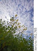 Купить «Трава на фоне неба», фото № 952765, снято 17 октября 2018 г. (c) Парушин Евгений / Фотобанк Лори