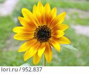 Летний цветок. Стоковое фото, фотограф Валерий Кондрашов / Фотобанк Лори