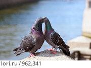 Купить «Голуби целуются», эксклюзивное фото № 962341, снято 29 июня 2009 г. (c) Валентина Качалова / Фотобанк Лори