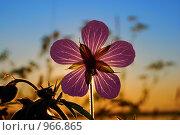 Во всей красе. Стоковое фото, фотограф Виталий Пушков / Фотобанк Лори