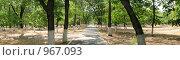Дорожка в парке. Стоковое фото, фотограф Владислав Цемкалов / Фотобанк Лори