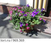 Купить «Декоративный вазон с цветами», эксклюзивное фото № 969369, снято 3 июля 2009 г. (c) lana1501 / Фотобанк Лори