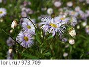 Купить «Садовые цветы», фото № 973709, снято 11 июля 2009 г. (c) Юлия Кузнецова / Фотобанк Лори