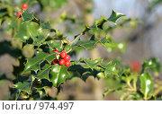 Купить «Красные ягоды», фото № 974497, снято 10 декабря 2007 г. (c) Марюнин Юрий / Фотобанк Лори