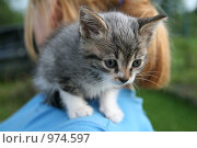 Купить «Серый котенок», фото № 974597, снято 8 июля 2009 г. (c) Анна Лукина / Фотобанк Лори