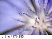Цветочный фон. Стоковое фото, фотограф Александр Кононыхин / Фотобанк Лори
