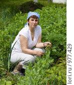 Купить «Сбор урожая», фото № 977429, снято 21 июня 2009 г. (c) Шупейко Алексей / Фотобанк Лори