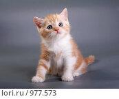 Купить «Рыжий котенок», фото № 977573, снято 22 мая 2009 г. (c) Cветлана Гладкова / Фотобанк Лори