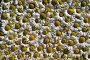Ромашки. Фон, эксклюзивное фото № 990009, снято 21 июля 2009 г. (c) Александр Алексеев / Фотобанк Лори