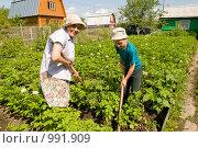 Купить «Ребенок помогает бабушке на даче», фото № 991909, снято 13 июля 2009 г. (c) Куликова Татьяна / Фотобанк Лори