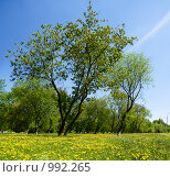 Купить «Весенний пейзаж», фото № 992265, снято 6 июня 2009 г. (c) Юрий Бельмесов / Фотобанк Лори