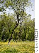 Купить «Весенний пейзаж», фото № 992289, снято 6 июня 2009 г. (c) Юрий Бельмесов / Фотобанк Лори