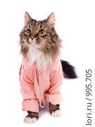 Купить «Кот в банном розовом халатике после душа», фото № 995705, снято 22 июля 2009 г. (c) Ирина Карлова / Фотобанк Лори