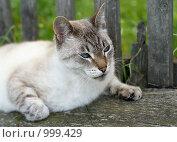 Кот на лавочке. Стоковое фото, фотограф Сергей Гусев / Фотобанк Лори