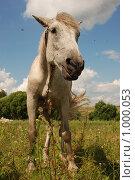 Лошадь в поле. Стоковое фото, фотограф Ксения Шаханова / Фотобанк Лори
