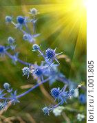 Купить «Синий колючий кустарник и солнце», фото № 1001805, снято 4 июля 2009 г. (c) Виктория Кириллова / Фотобанк Лори