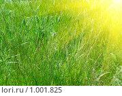 Купить «Зеленая трава и солнце», фото № 1001825, снято 30 мая 2009 г. (c) Виктория Кириллова / Фотобанк Лори