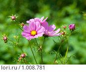 Садовые цветы. Стоковое фото, фотограф Вячеслав Маслов / Фотобанк Лори