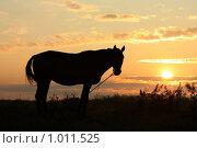 Купить «Силуэт лошади в поле на рассвете», фото № 1011525, снято 1 августа 2009 г. (c) Яна Королёва / Фотобанк Лори