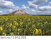 Поле с подсолнухами перед горой Тра-Тау. Стоковое фото, фотограф Сергей Девяткин / Фотобанк Лори