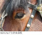 Купить «Глаз лошади», эксклюзивное фото № 1014645, снято 12 апреля 2008 г. (c) lana1501 / Фотобанк Лори