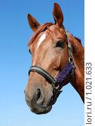 Купить «Портрет коня», фото № 1021633, снято 6 августа 2009 г. (c) Яна Королёва / Фотобанк Лори