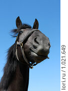 Купить «Черная лошадь», фото № 1021649, снято 6 августа 2009 г. (c) Яна Королёва / Фотобанк Лори