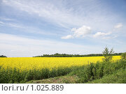 Летний пейзаж. Стоковое фото, фотограф Андрей Марцинкевич / Фотобанк Лори