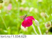 Розовый цветок с мотыльком. Стоковое фото, фотограф Ilogin / Фотобанк Лори