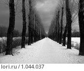 Купить «Зимняя аллея», фото № 1044037, снято 20 февраля 2008 г. (c) Светлана Кудрина / Фотобанк Лори