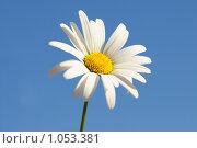 Купить «Ромашка», фото № 1053381, снято 27 июля 2009 г. (c) Ксения Крылова / Фотобанк Лори
