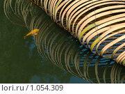 Бамбук на воде. Стоковое фото, фотограф Наталья Ревкина / Фотобанк Лори