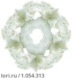 Белый тюльпан. Стоковое фото, фотограф Наталья Ревкина / Фотобанк Лори