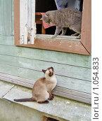 Купить «Беседа двух кошек», эксклюзивное фото № 1054833, снято 10 мая 2004 г. (c) Ирина Кожемякина / Фотобанк Лори