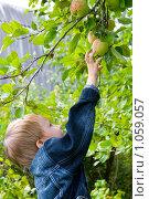 Купить «Мальчик тянется за яблоком», фото № 1059057, снято 29 августа 2009 г. (c) Елена Блохина / Фотобанк Лори
