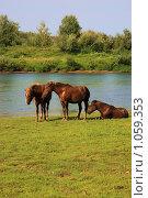 Купить «Лошади в верховье Печоры», фото № 1059353, снято 20 августа 2009 г. (c) Анатолий Ефимов / Фотобанк Лори