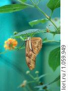 Купить «Бабочка висит на ветке, нежный бирюзовый фон», фото № 1059949, снято 28 августа 2009 г. (c) Васильева Татьяна / Фотобанк Лори