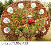Купить «Цветочный павлин», фото № 1062433, снято 30 августа 2009 г. (c) Сагирова Алсу / Фотобанк Лори