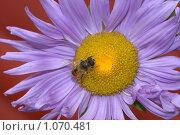 Цветок. Стоковое фото, фотограф юлия юрочка / Фотобанк Лори