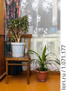 Купить «Комнатные растения», фото № 1071177, снято 7 января 2009 г. (c) Вадим Орлов / Фотобанк Лори