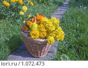 Купить «Корзина с желтыми цветами», фото № 1072473, снято 3 сентября 2009 г. (c) Илюхина Наталья / Фотобанк Лори