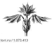 Купить «Значок конца главы», иллюстрация № 1073413 (c) Кондорский Дмитрий / Фотобанк Лори
